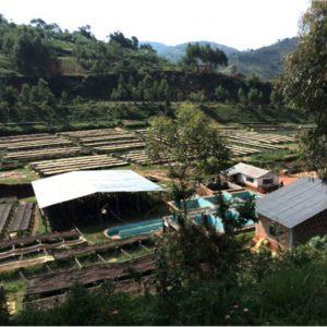 Farmer Ezéchiel Miburo, Gakenke (Greenco Burundi) Cup of Excellence Gewinner 2015 Burundi - bester Kaffee von Excellentas