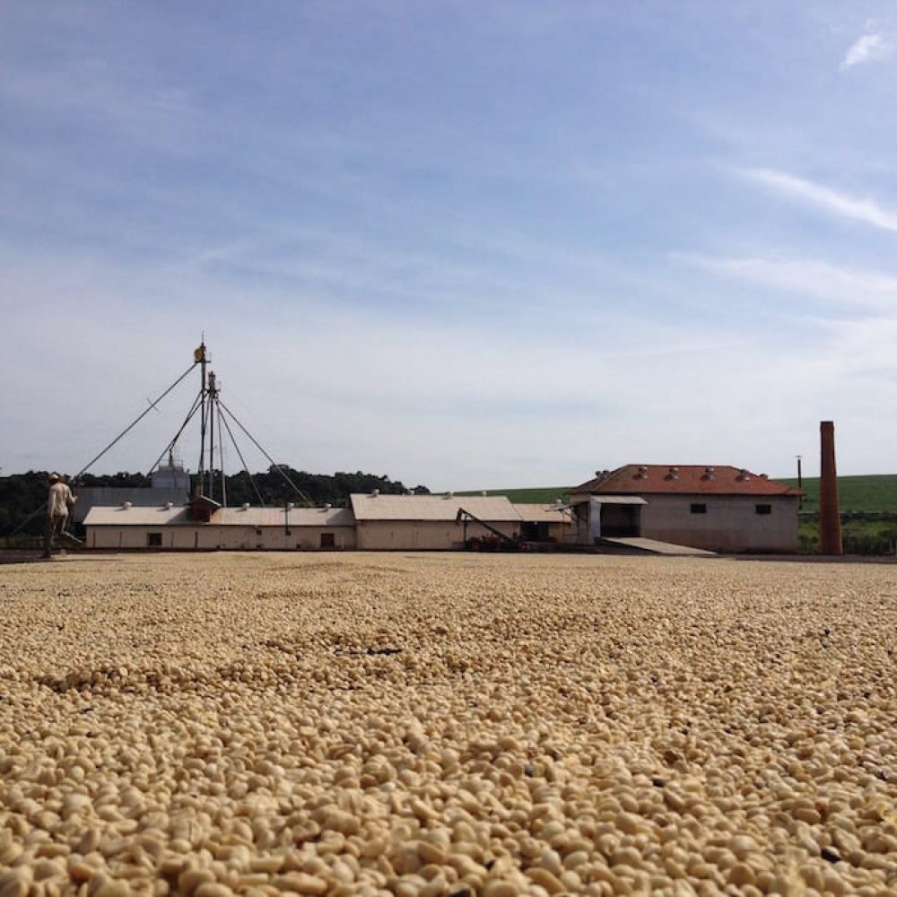 Fazenda Califórnia Kaffee Farm Brasilien Flavia Garcia Mureb Jacob Saldanha Rodrigues